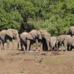 Kanda, Botswana (23)