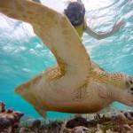 Snorkeling with turtles, Caye Calker, Belize 2013